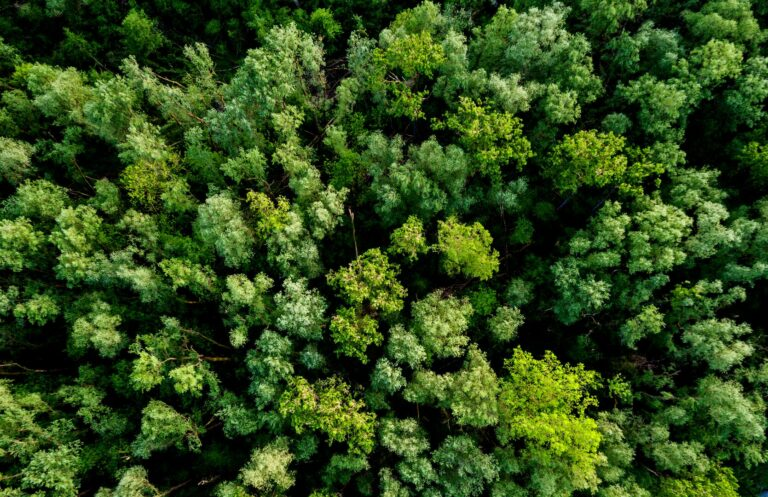 Birds-eye view of a forest